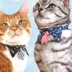 猫の首輪 iCat